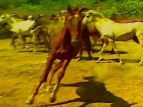 Cavalo Lavradeiro - Últimos cavalos selvagens do Brasil