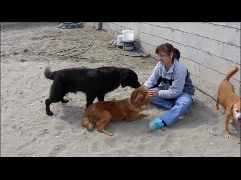 Animalinneed: Video of Celine and Sjimmy