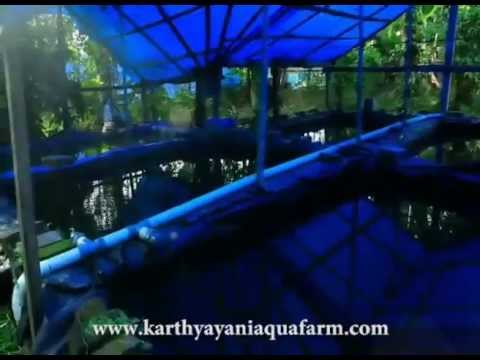 karthyayani aqua fishfarm -  Ornamental fish farm in Kottat - Chalakudy