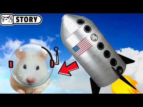 Hamster Maze Spaceship / My Funny Pet Hamster in Rocket Obstacle Course / Spaceship Playground