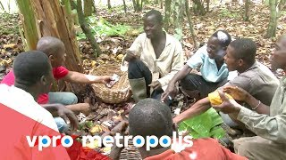 Ivory Coast Cocoa Farmers Taste Chocolate for the First Time