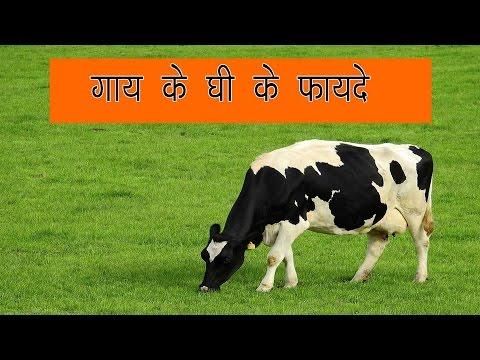 गाय के घी के फायदे - Gaay ke ghee ke fayde in hindi