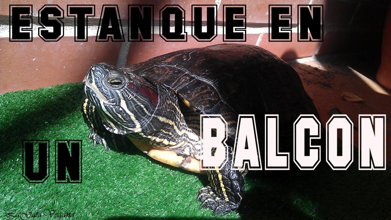 Crear un estanque en un balcon para tortugas solucion for Estanque para tortugas