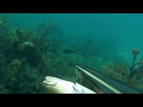 Team JesusFreak Spearfishing