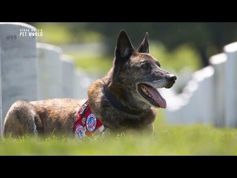 Thumbnail image for 'Service Dogs for Veterans, Dr. Karen Overall'