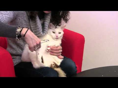 Declawing Cats Humane to Declawing Cats How to