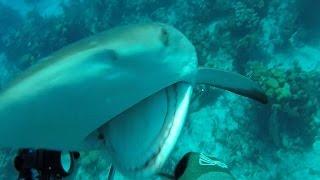サメに突進される