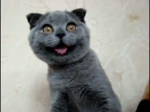Smiling cat... or dog? ;-) - YouTube Smiling Dog And Cat