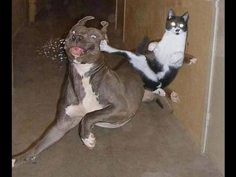 Funny Epic Cats for 20 Minutes