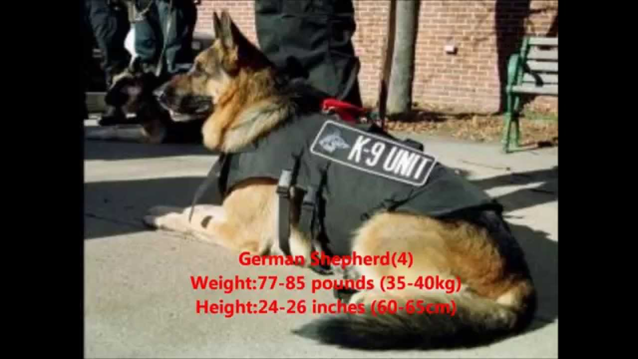 Top 10 Guard Dogs In The World - YouTube