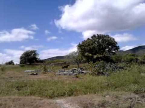2 POTROS QUARTO DE MILHA  MACHOS NA FAZENDA PARAISO QUIXERAMOBIM. CONTATO (85)99888871 CEARÁ