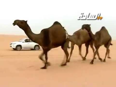 منقية الشيخ / عايض بن دغيثر العتيبي (رحمه الله)