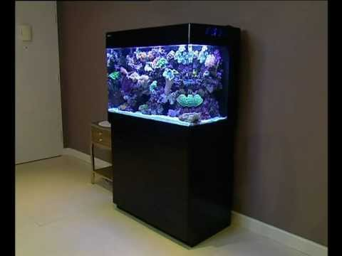 all in one - Innovative Marine All in One Aquarium Saltwater Fish Tank ...