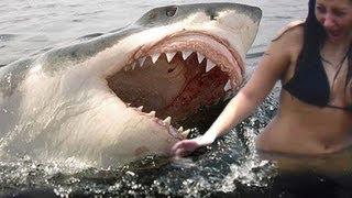 SHARK ATTACKS Caught On Tape