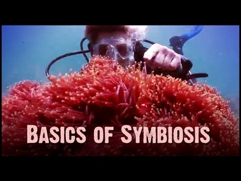 Symbiosis: Mutualism, Commensalsim and Parasitism