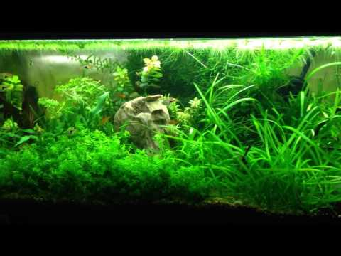 Black beard Algae and CO2/Lighting and balance