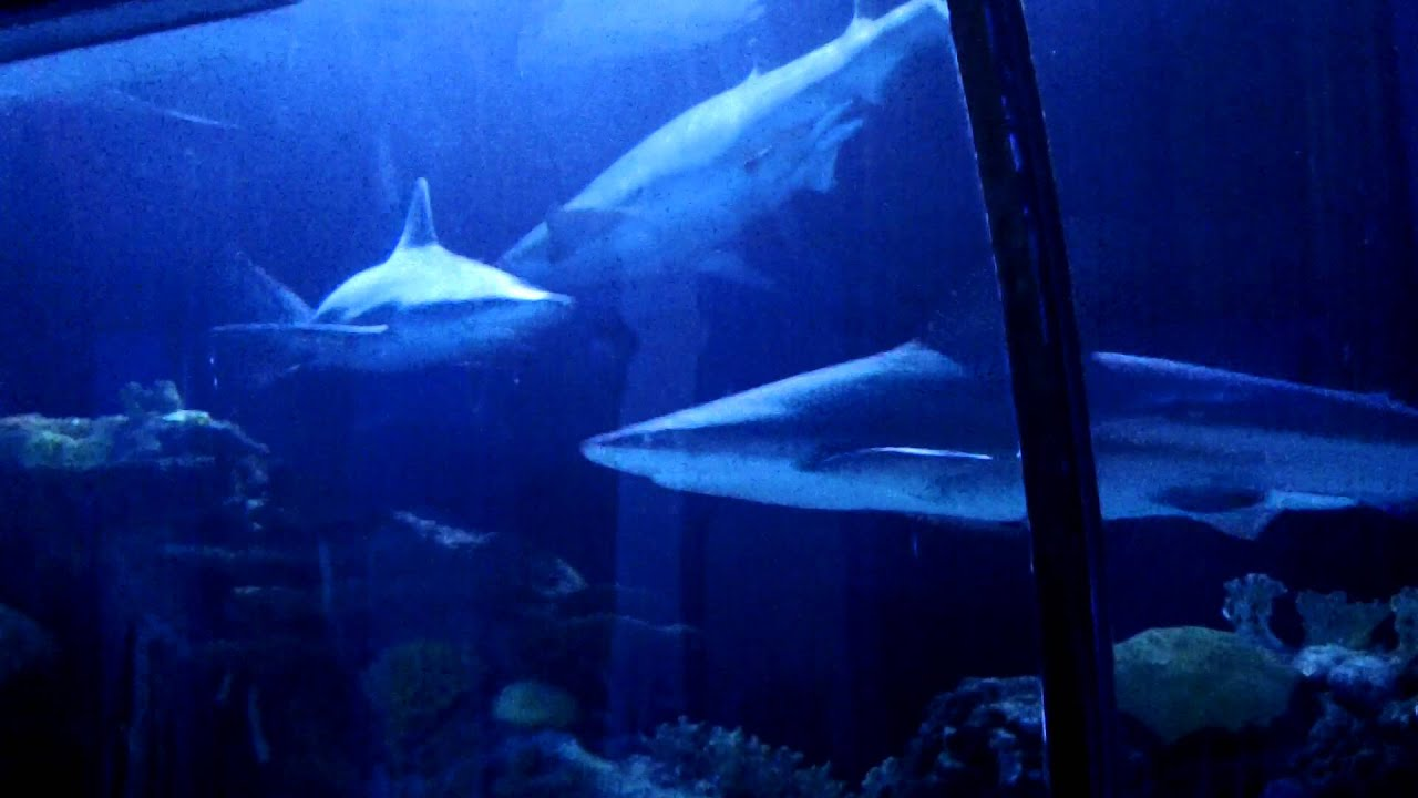 Shark Voyage Aquarium Downtown Houston Youtube