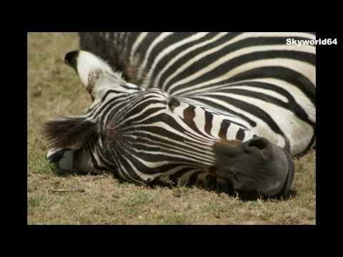 Animaux sauvages en photos et vidéo