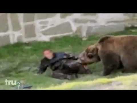 gấu ăn thịt người