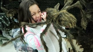 SPIDER ATTACK !! Kids react to Halloween Spirit decoration