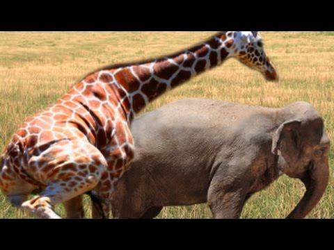 Animal Mating Horse Mating Breeding Zebra Mating Dog Mating Wild ...