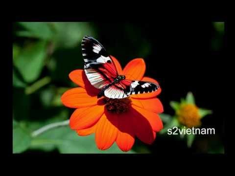 Hoa thơm bướm lượn - Anh Khang ft. Xuân Trung