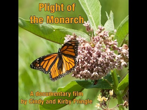 Plight of the Monarch