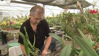 picture of Orchid Grower