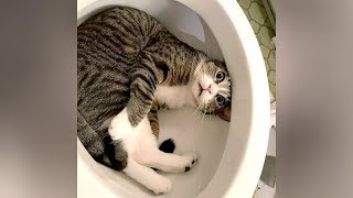 I SWEAR you will CRY WITH LAUGHTER! - Ultra FUNNY PETS & ANIMALS