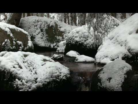 Meditation Relaxation in the Forest by the Stream with Natural Sounds - Stress Relief
