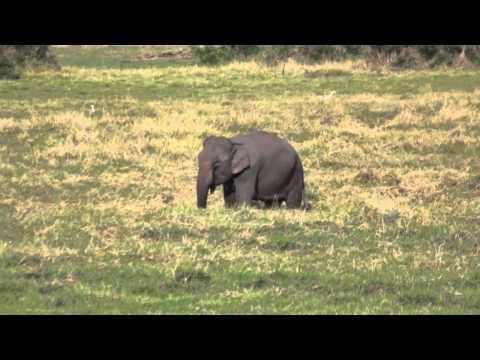 The Mekong River Journey: An Elephant Encounter