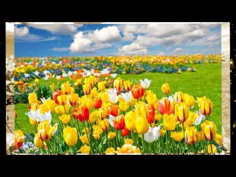 Vương quốc của những chiếc cối xay gió và hoa tulip