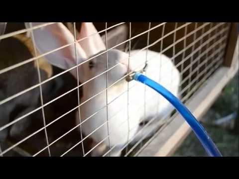 Поилка для кроликов своими руками зимой