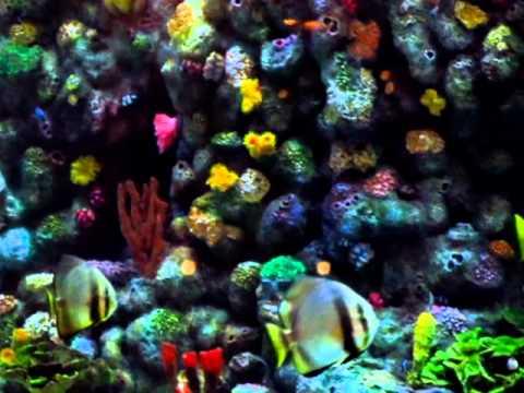 Heron tower london england beautiful huge aquarium for Tower fish tank