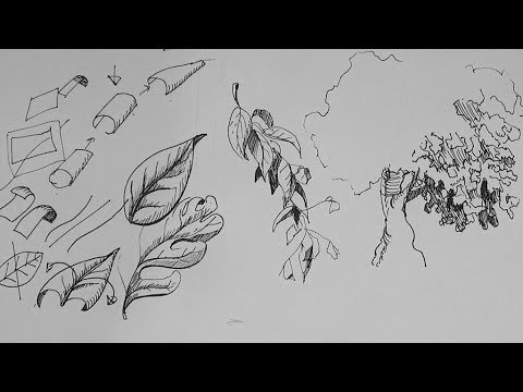 Pen And Ink Drawing Tutorials How To Draw A Leaf And