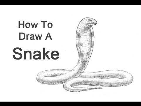 How to Draw a Snake (King Cobra) - YouTube