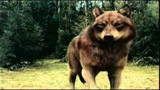 Twilight Saga: Eclipse Battle Vampires & Wolf Pack