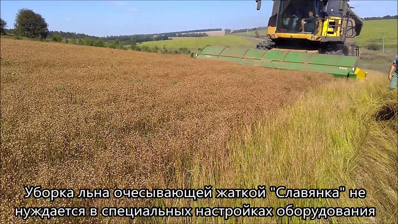 Ютуб выращивание и уборка масличного льна 70