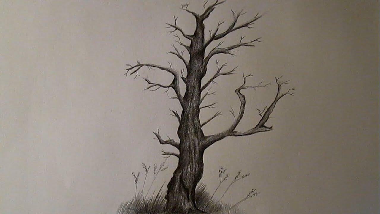 C mo dibujar un rbol seco y sin hojas rbol a l piz hd for Arboles de hoja perenne sin fruto