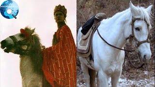 Số phận thê thảm ít người biết của Bạch Long Mã hậu Tây Du Ký