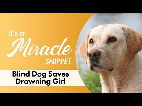 Blind Dog Saves Drowning Girl - It's A Miracle - 4365