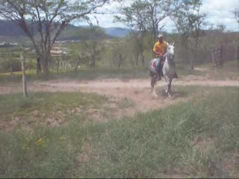 Mangalarga Marchador Bimba Xamêgo 14 03 2010   Santa Inês   Ba