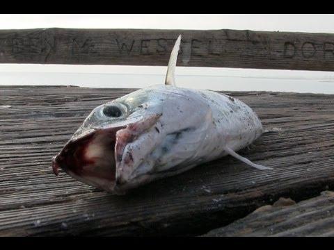 Tâm Trạng Của Những Con Cá Khi Bị Bắt Lên Bờ