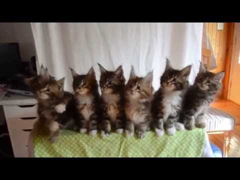 Girl Tests The Reflexes Of Seven Adorable Kittens