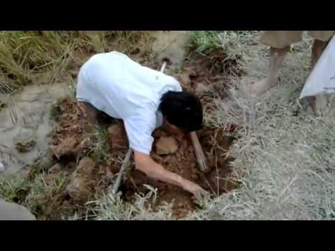 Bắt Chuột Đồng Hay Nhất Và Vui Nhất Xem Cười Bể Bụng