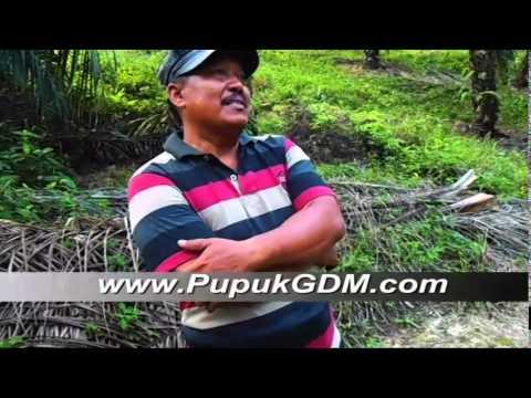 Pak Surono Menggunakan Pupuk Organik Cair GDM Pada Tanaman Sawit