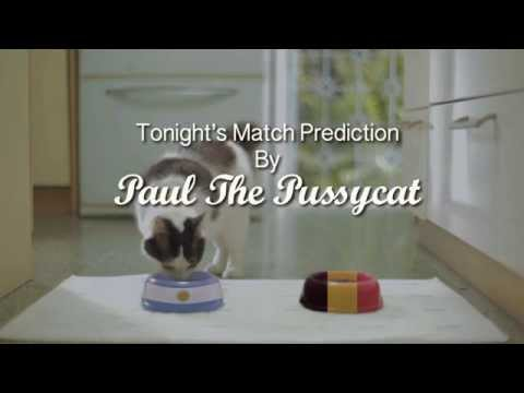 Paul The Pussycat Predicts Argentina Vs Belgium