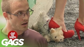 Skrytá kamera so psami