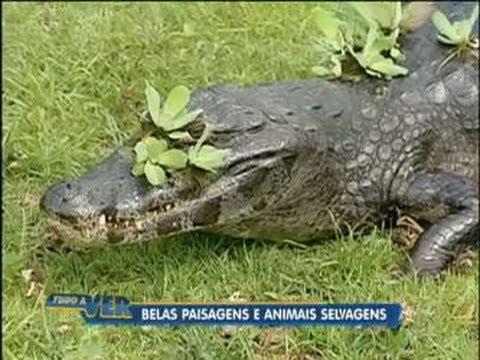 Tudo a Ver 05/05/2011: Animais selvagens e belas paisagens atraem milhões de turistas ao Pantanal