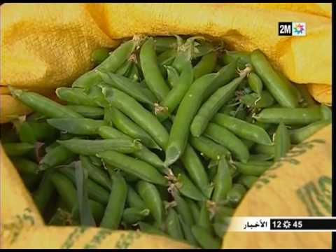 الجلبان يتربع على عرش المنتجات الفلاحية بإقليم الحسيمة